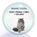 Pack Maine Coon 150